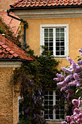 Red Roof Photo Originals - Wisteria House by Alison Gunn