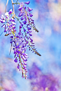 Joan Mccool Metal Prints - Wisteria Metal Print by Joan McCool