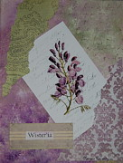 Nature Study Prints - Wisteria Print by Tamyra Crossley