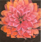 Anne-Elizabeth Whiteway - Wistful Orange and Pink...