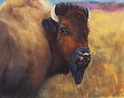Bulls Pastels Posters - With Age Comes Beauty Poster by Frances Marino