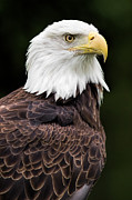 National Symbol Prints - With Dignity Print by Dale Kincaid