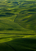 Palouse Prints - Within a Sea of  Green Print by Mike  Dawson
