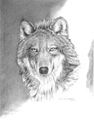 Wildlife Drawings Drawings Prints - Wolf-3 Print by Lee Updike