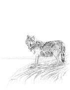 Carl Genovese - Wolf
