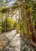 Twisp Photo Prints - Wolf Creek Afternoon Light Print by Omaste Witkowski