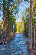 Methow Valley Prints - Wolf Creek Flowing Downstream  Print by Omaste Witkowski