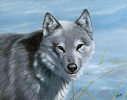 Dry Lake Paintings - Wolf in the snow by John Silver