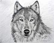 Head Shot Drawings - Wolf by Julie Brugh Riffey