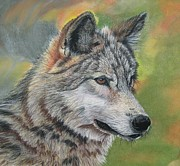 Wolf Pastels Framed Prints - Wolf Framed Print by Linda Eversole