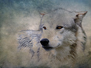 Attack Dog Photos - Wolf Paint by Steve McKinzie