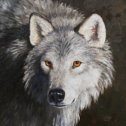 Gray Paintings - Wolf Portrait by Crista Forest