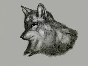 Wolf Paintings - Wolf by Shabnam Nassir