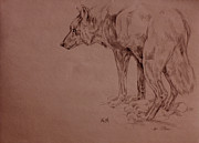 Nature Study Art - Wolf Sketch by Derrick Higgins
