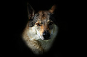 Jenny Rainbow - Wolfy