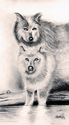 Pack Animal Drawings Posters - Wolves Poster by Steve Ellenburg