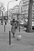 Long Street Framed Prints - Woman in Paris Walking Dog Framed Print by Matthew Bamberg