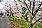 Woman In Tree Print by Dan Friend