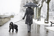 Dog Walking Prints - Woman walking on the street when in its snowing Print by Mats Silvan