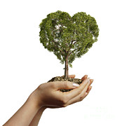 Hands Of Love Posters - Womans Hands Holding Soil With A Tree Poster by Leonello Calvetti