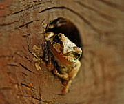Knot Hole Prints - Wonder Frog Print by Nick  Boren