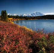Denali National Park Prints - Wonder LAke Print by Ed Boudreau