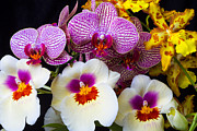 Row Photos - Wonderful lovely Orchids by Garry Gay