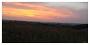 Andrzej Goszcz  - Wonderful poppy fields...