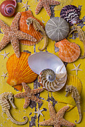 Seashell Seashells Framed Prints - Wonderful sea life Framed Print by Garry Gay