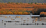 Tri Colored Prints - Wonderful Wetlands Print by Al Powell Photography USA