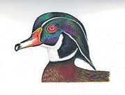Elizabeth H Tudor - Wood Duck