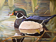Wood Duck Painting Metal Prints - Wood Duck on Pond Metal Print by Laurie Rohner