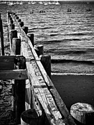Pilings Prints - Wood Pilings in Black and White Print by Colleen Kammerer