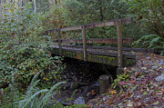 Darleen Stry - Wood Trail Bridge