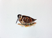 Woodcock Prints - Woodcock Print by Paul Francev