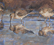 Woodcock Prints - Woodcocks in a pond Print by Anke Classen
