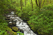 Columbia River Gorge Prints - Wooded Stream in the Spring Print by Andrew Soundarajan