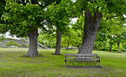 Vlad Baciu Art - Wooden Bench Under A Tree by Vlad Baciu