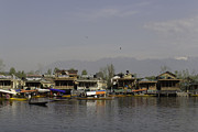 Greenery Photos - Wooden boats shikaras and houseboats in the Dal Lake in Srinagar by Ashish Agarwal