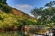 Palawan Prints - Wooden bridge Maquinit Hot Springs Philippines Print by Fototrav Print