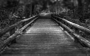 Monochrome Art - Wooden Bridge by Scott Norris