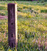 Wooden Fencepost Print by Tracy Salava