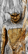 Weathered Wood Sculpture Prints - Wooden Sculpture Print by Ralf Kunze