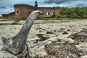 Dry Tortugas Prints - Wooden Seal Print by Adam Jewell