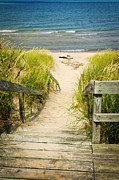 Grass Metal Prints - Wooden stairs over dunes at beach Metal Print by Elena Elisseeva
