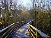John Adams Prints - Wooden walkway Print by John Adams