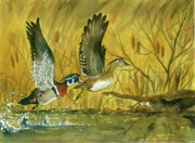 Ducks Paintings - Woodies by Bud Bullivant