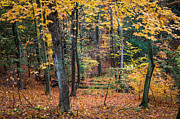 Fall Colors Autumn Colors Posters - Woodland Confetti Poster by Bill Pevlor