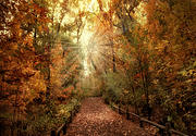 Autumn Woods Metal Prints - Woodland Light Metal Print by Jessica Jenney