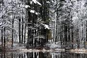 Brenda Giasson - Woodland Love